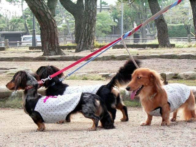 芦屋松浜公園で散歩