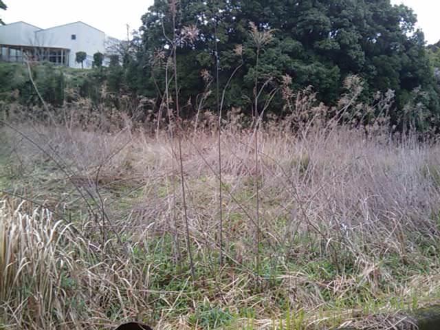 自然農法3
