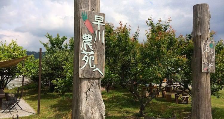 綾 早川農苑